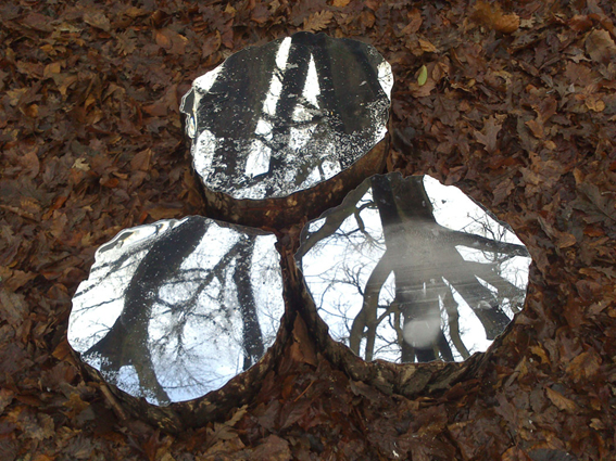 1_mirrored logs RBGE lee borthwick