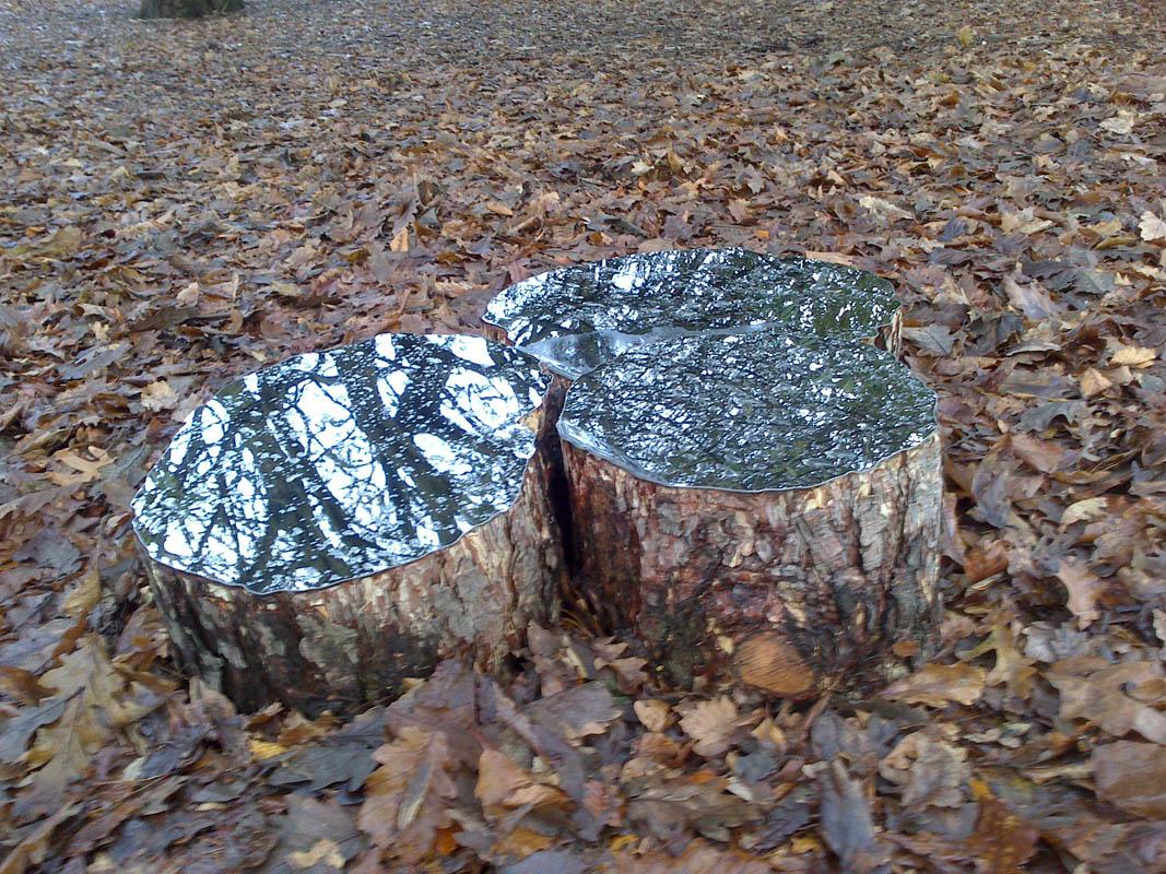 2_Mirrored logs RBGE LeeBorthwick 3